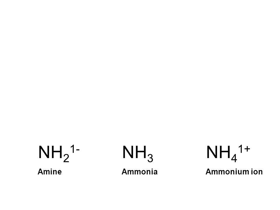 NH21- NH3 NH41+ Amine Ammonia Ammonium ion