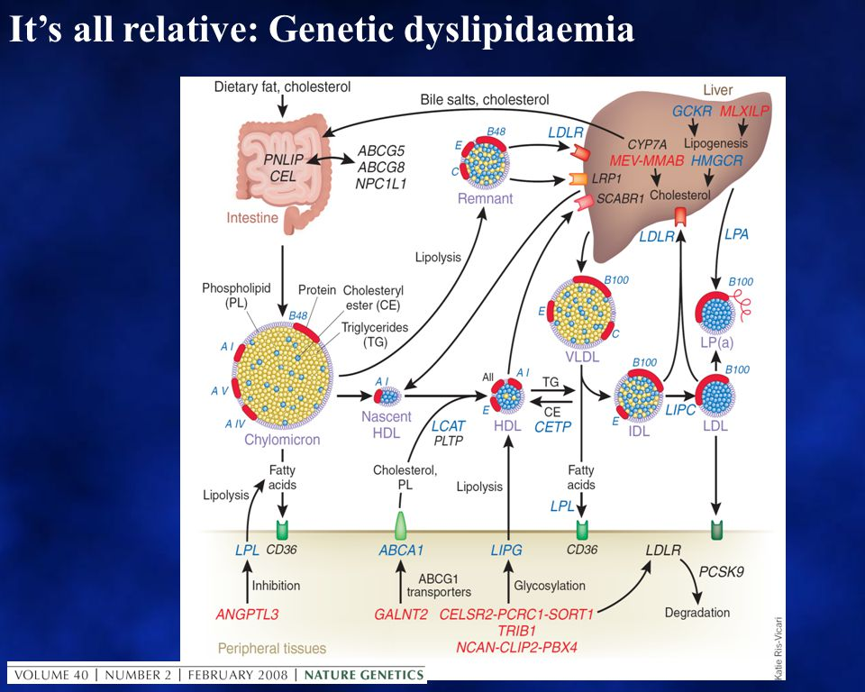 It's all relative: Genetic dyslipidaemia