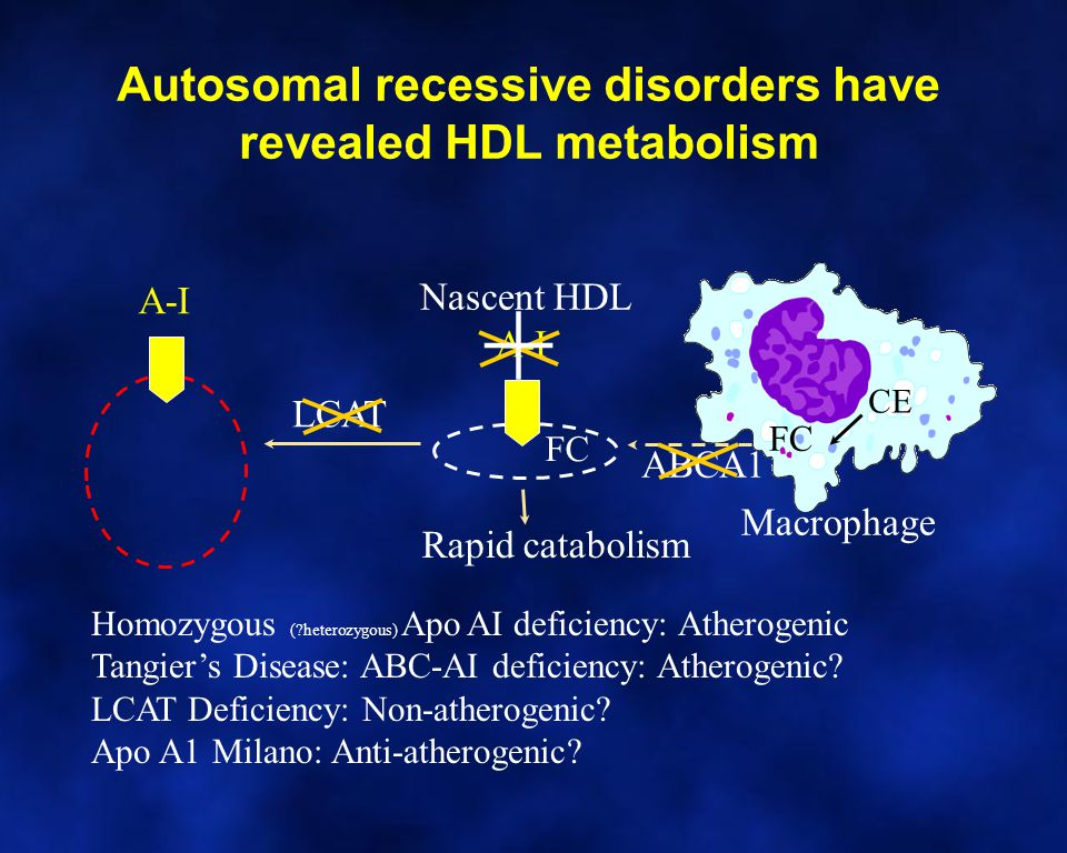 Autosomal recessive disorders have revealed HDL metabolism