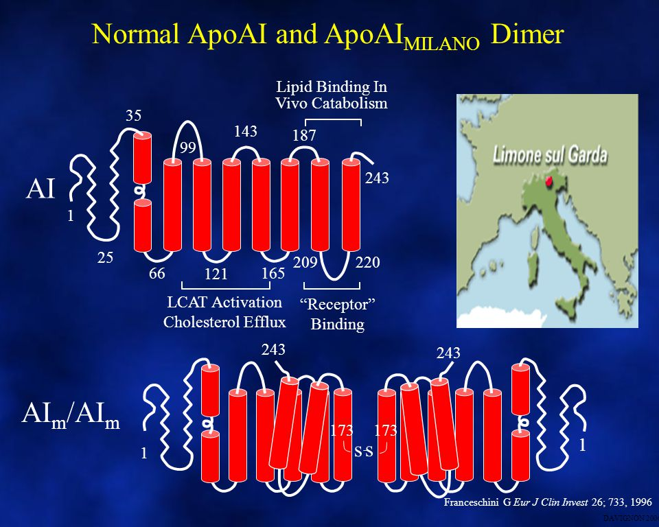 Normal ApoAI and ApoAIMILANO Dimer
