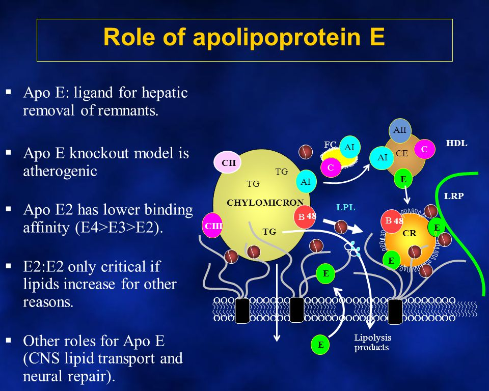 Role of apolipoprotein E
