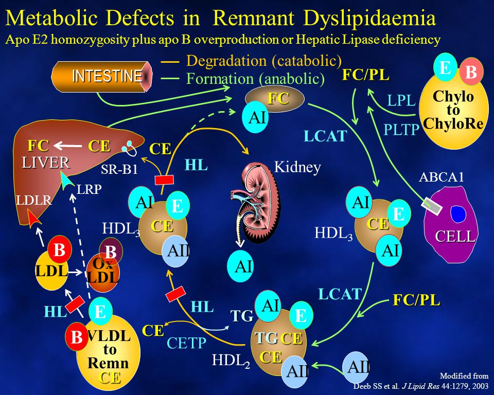 Metabolic Defects in Remnant Dyslipidaemia