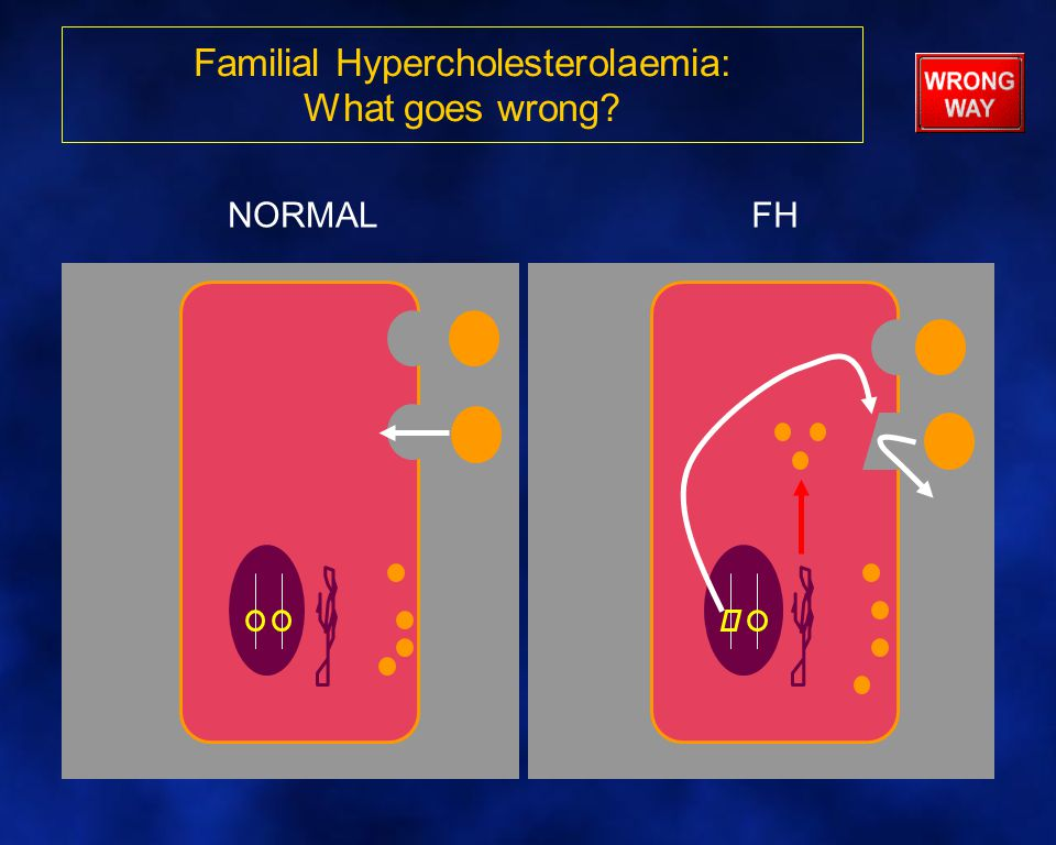 Familial Hypercholesterolaemia: What goes wrong