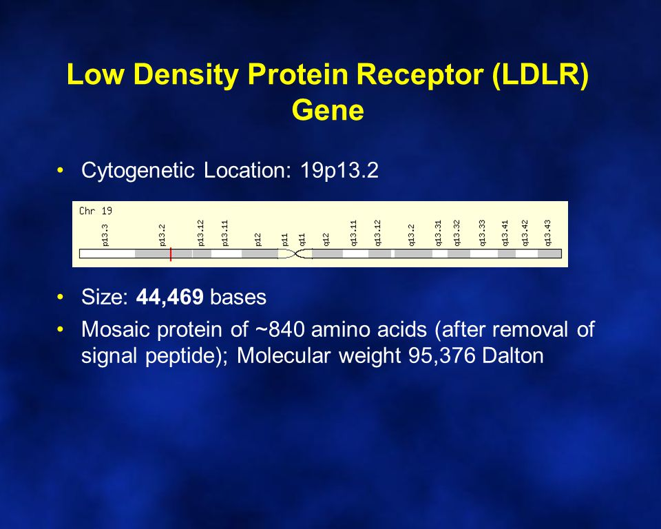 Low Density Protein Receptor (LDLR) Gene