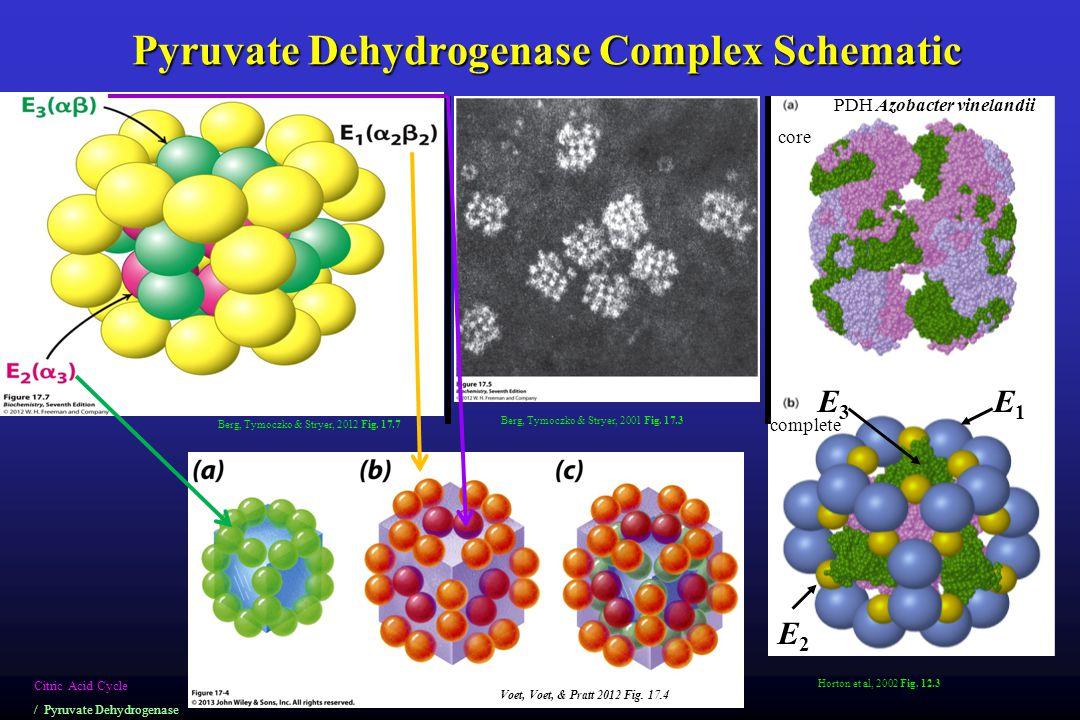 Pyruvate Dehydrogenase Complex Schematic