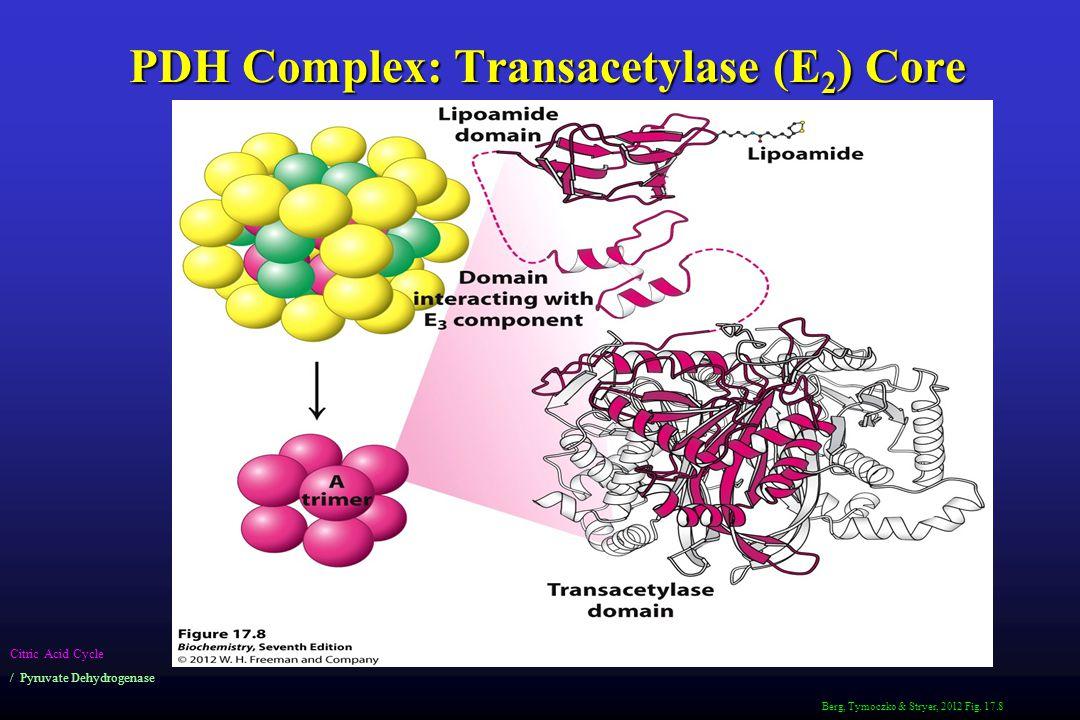PDH Complex: Transacetylase (E2) Core