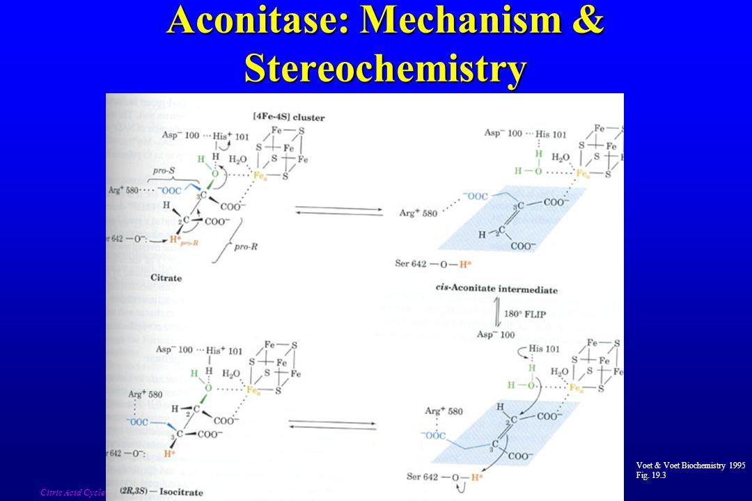 Aconitase: Mechanism & Stereochemistry