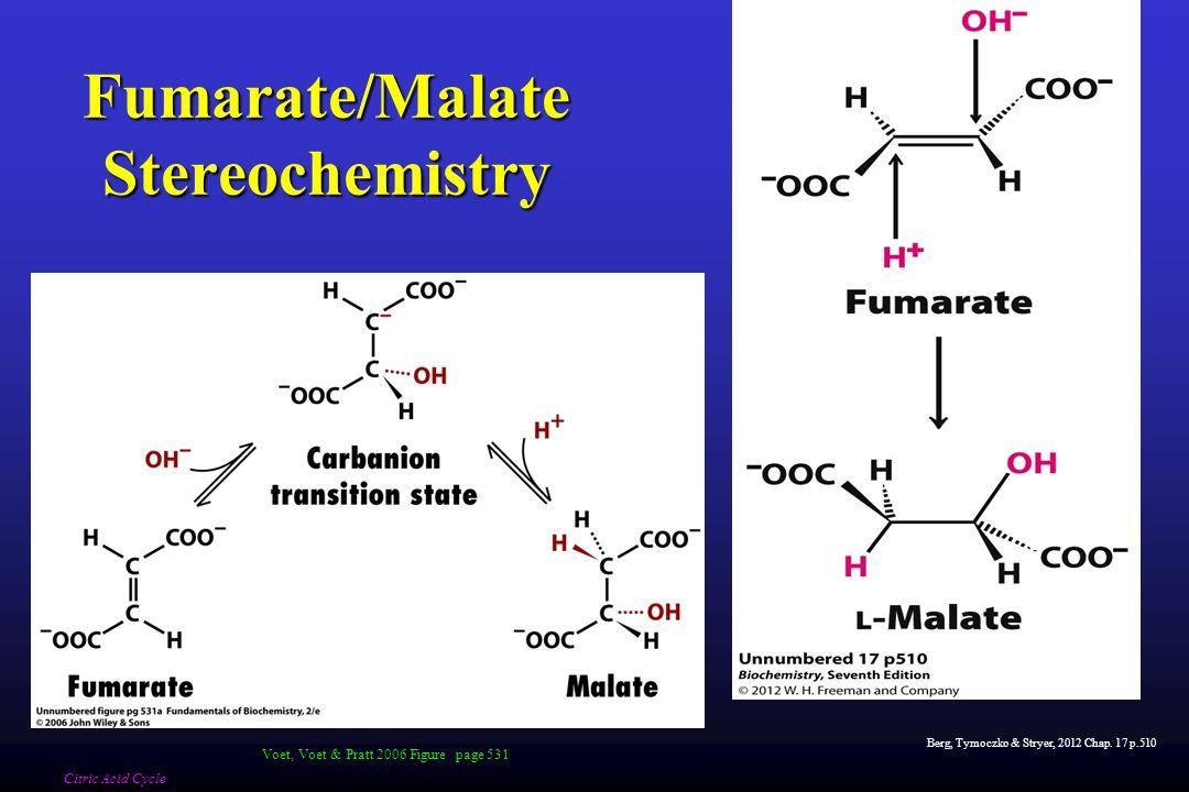 Fumarate/Malate Stereochemistry