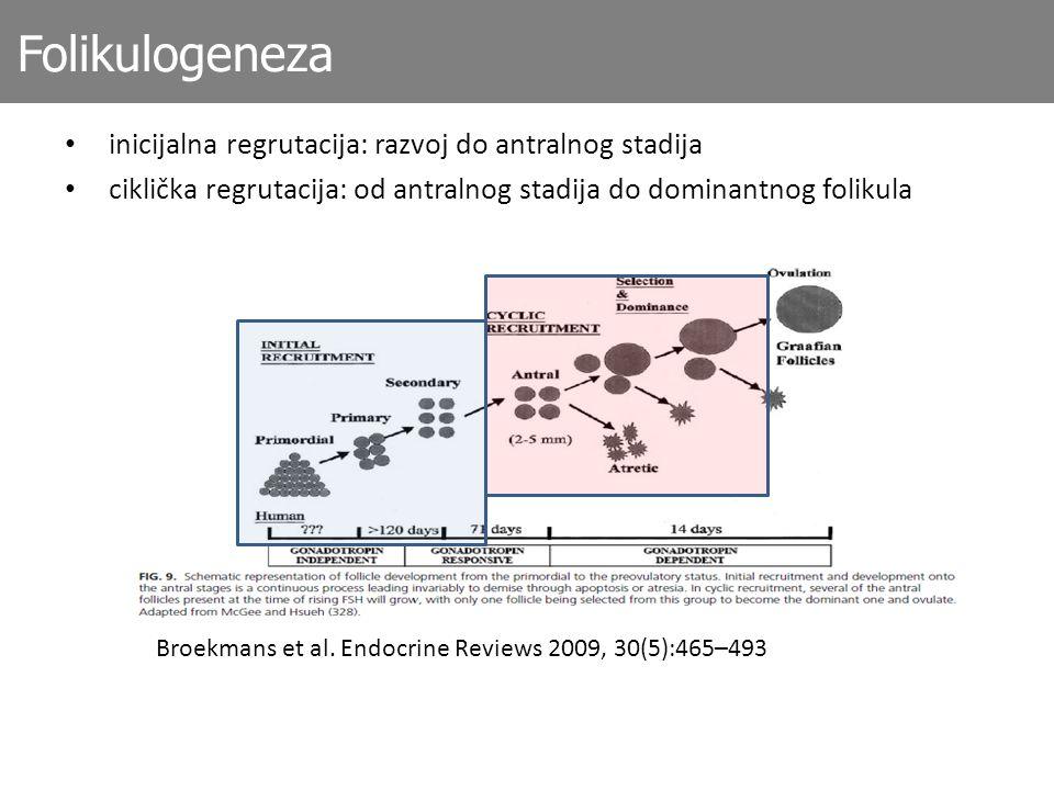 Folikulogeneza inicijalna regrutacija: razvoj do antralnog stadija