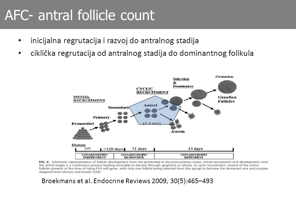 AFC- antral follicle count