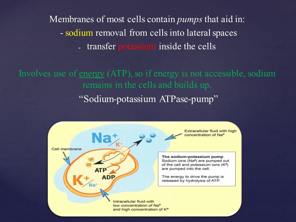 Sodium-potassium ATPase-pump