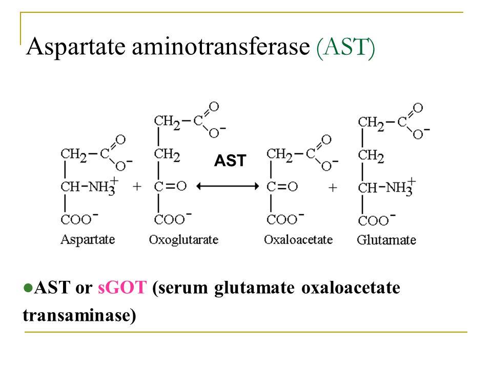 Aspartate aminotransferase (AST)