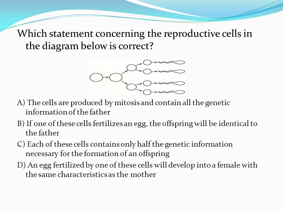 Which statement concerning the reproductive cells in the diagram below is correct