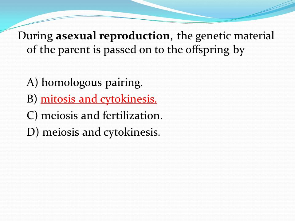 During asexual reproduction, the genetic material of the parent is passed on to the offspring by A) homologous pairing.