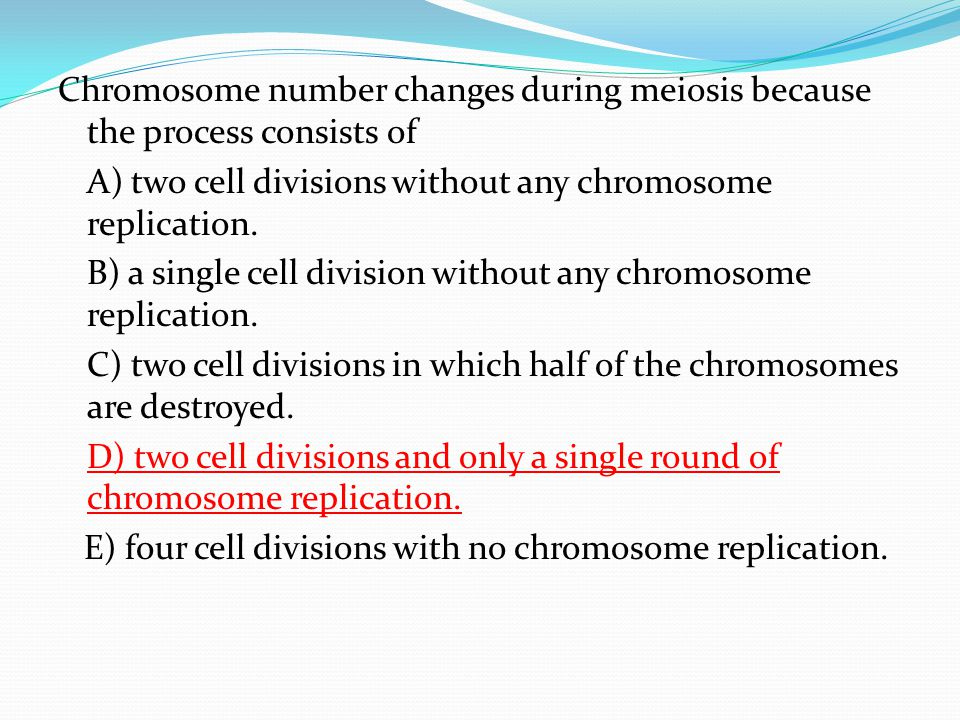 Chromosome number changes during meiosis because the process consists of A) two cell divisions without any chromosome replication.