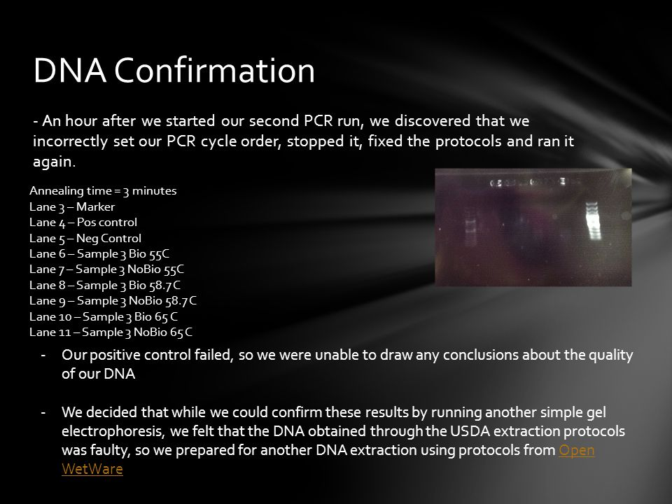 DNA Confirmation