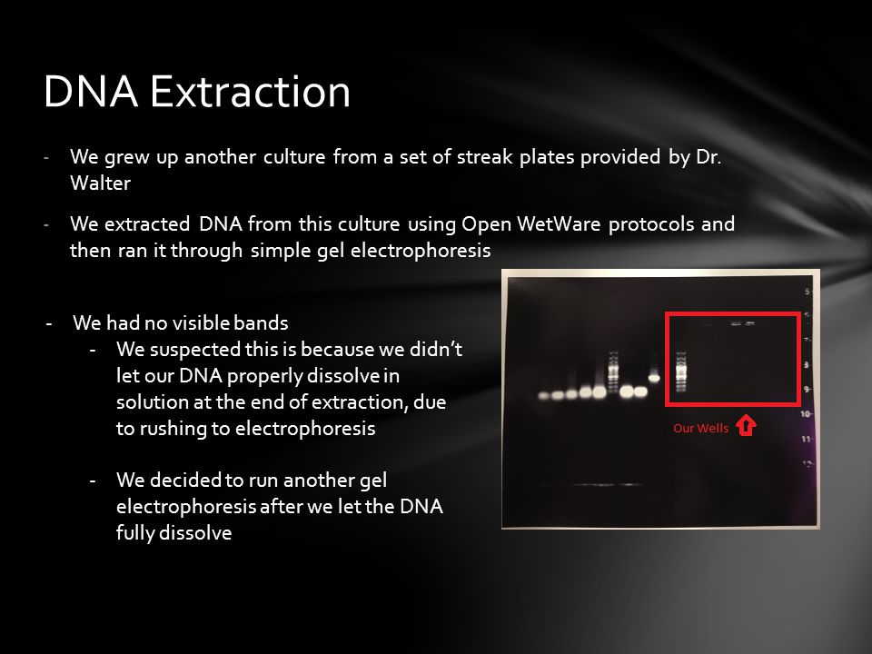 DNA Extraction We grew up another culture from a set of streak plates provided by Dr. Walter.