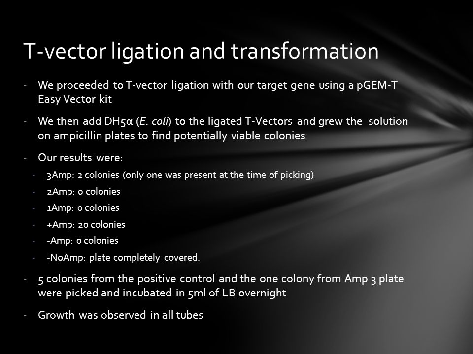 T-vector ligation and transformation