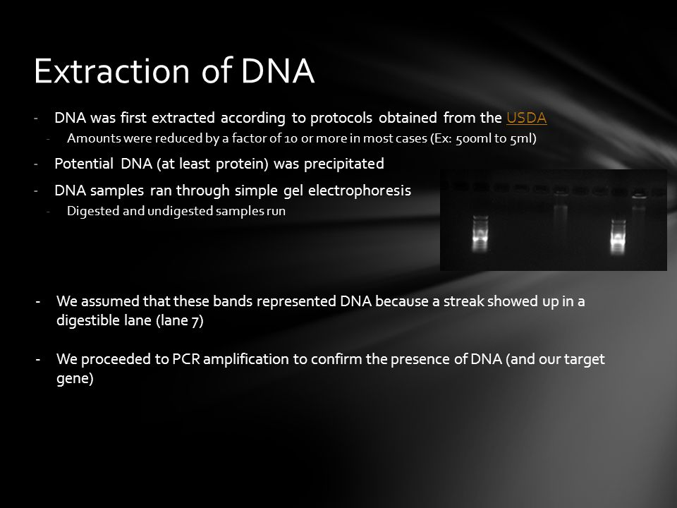 Extraction of DNA DNA was first extracted according to protocols obtained from the USDA.