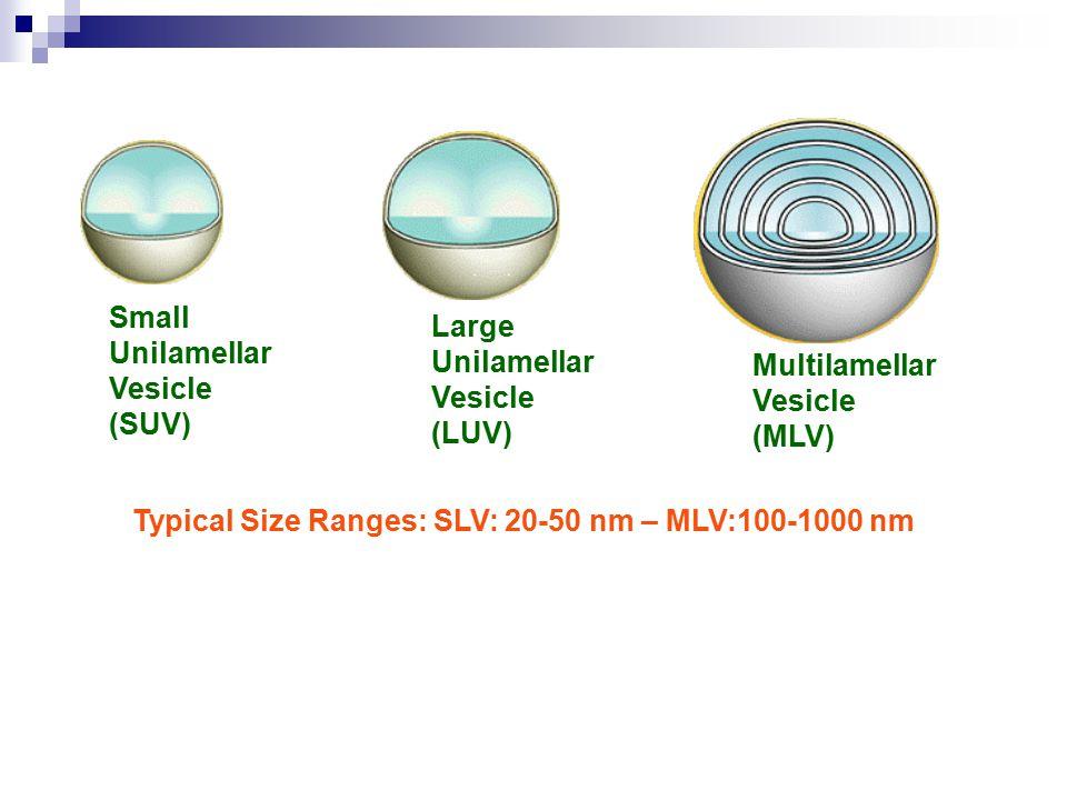 Small Unilamellar. Vesicle. (SUV) Large. (LUV) Multilamellar.