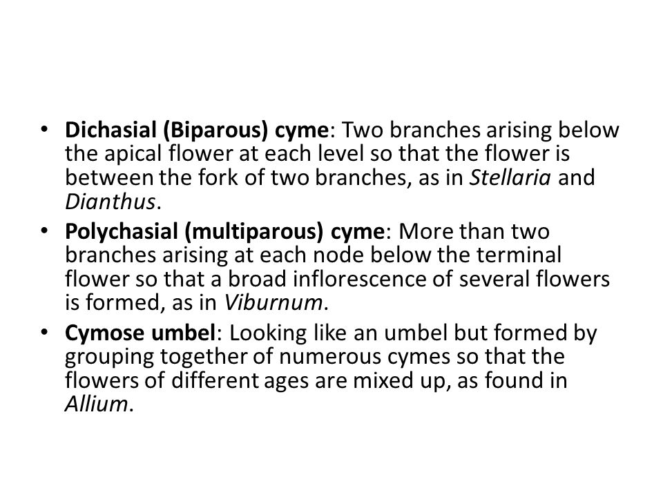 Dichasial (Biparous) cyme: Two branches arising below the apical flower at each level so that the flower is between the fork of two branches, as in Stellaria and Dianthus.