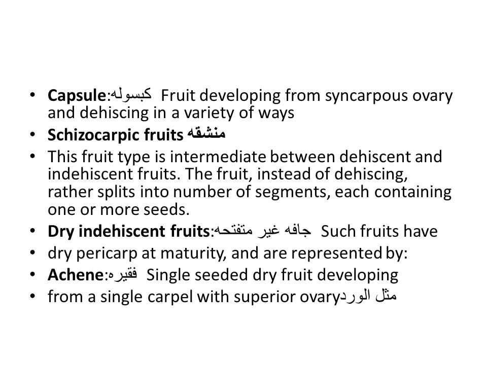 Capsule: كبسوله Fruit developing from syncarpous ovary and dehiscing in a variety of ways