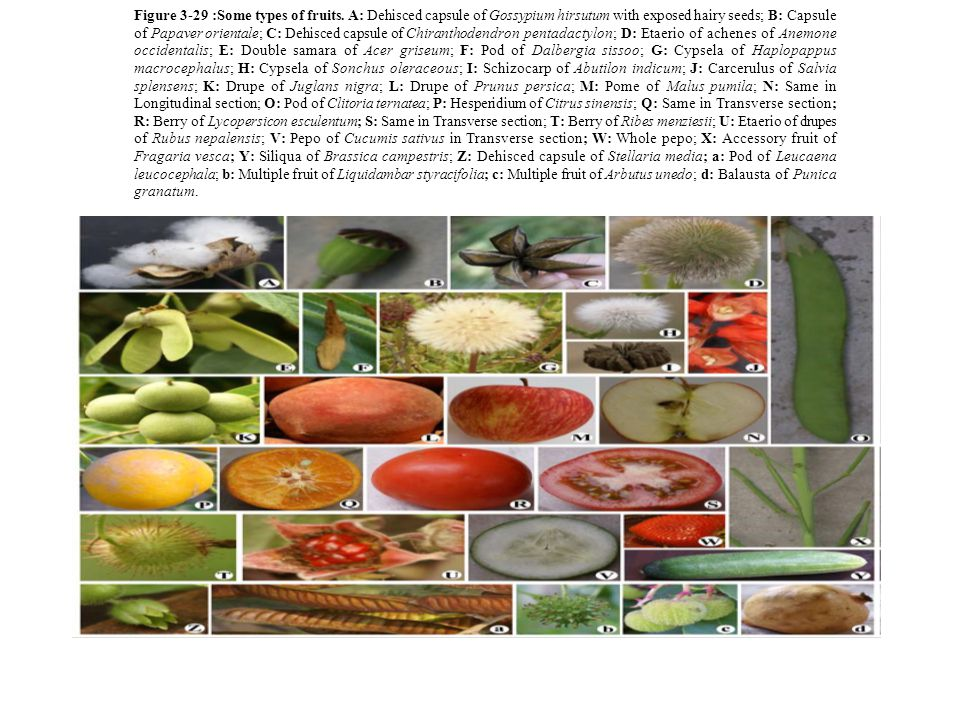 Figure 3-29 :Some types of fruits