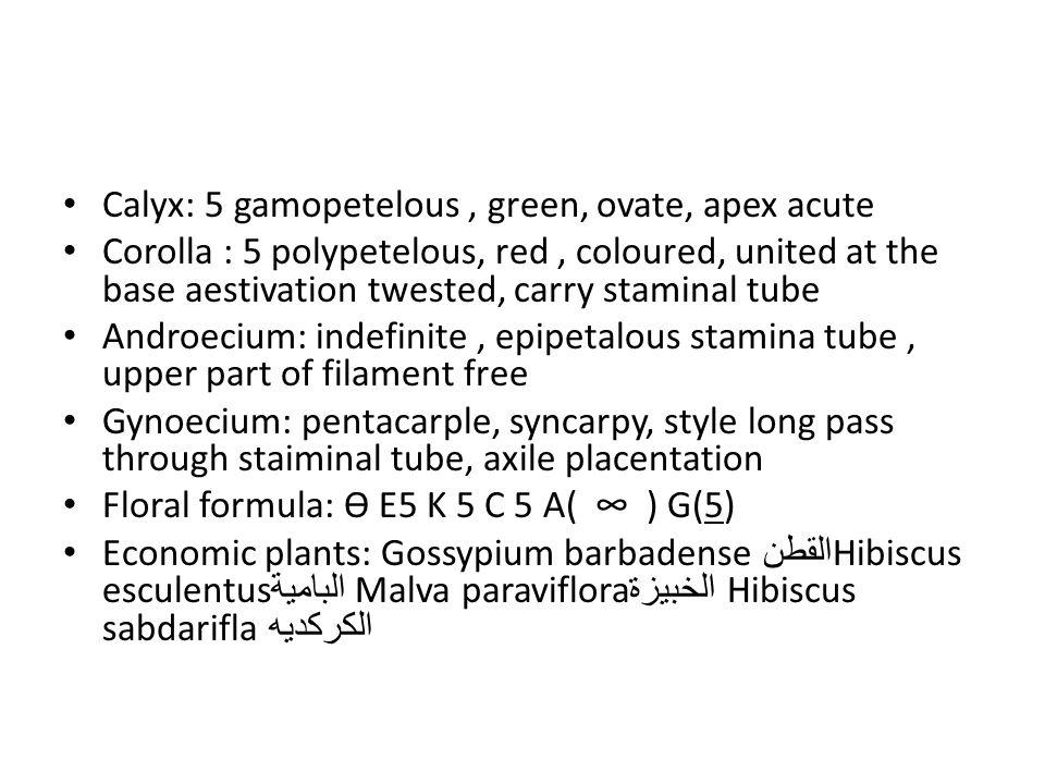 Calyx: 5 gamopetelous , green, ovate, apex acute