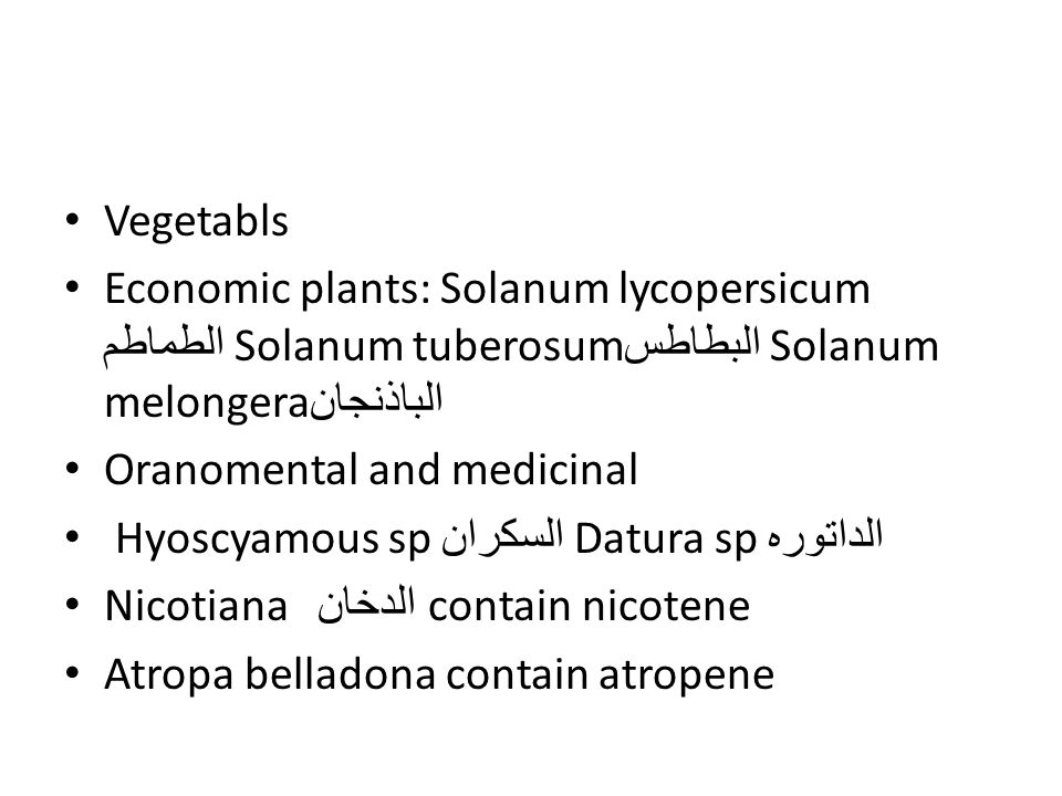 Vegetabls Economic plants: Solanum lycopersicum الطماطم Solanum tuberosumالبطاطس Solanum melongera الباذنجان.