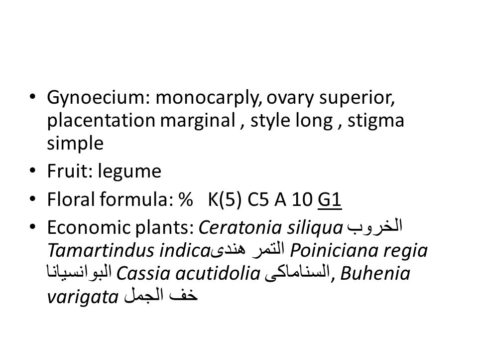 Gynoecium: monocarply, ovary superior, placentation marginal , style long , stigma simple