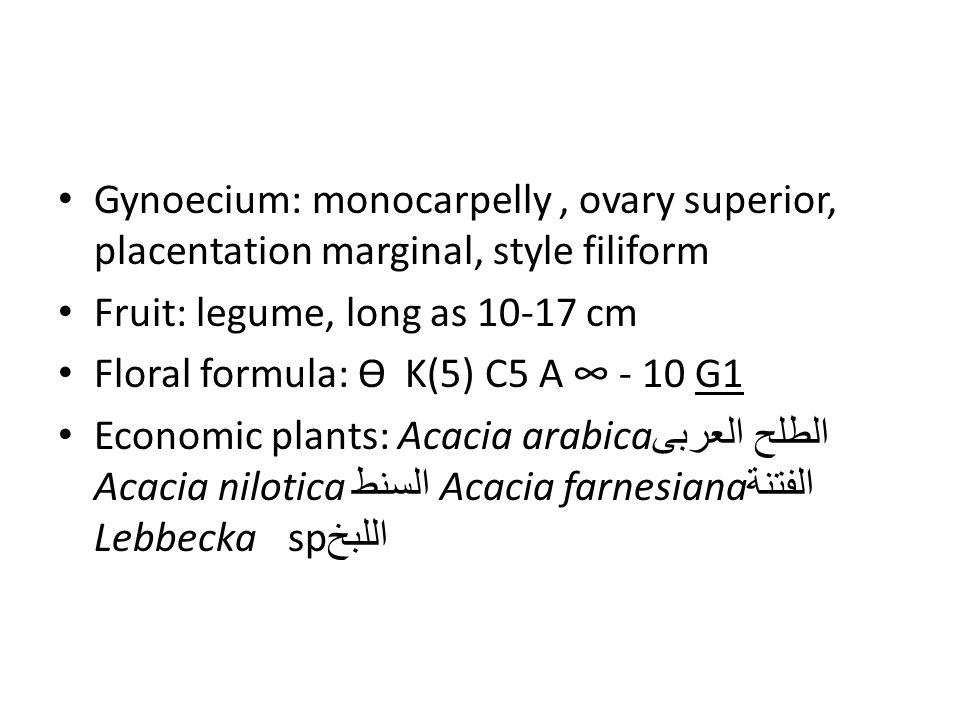 Gynoecium: monocarpelly , ovary superior, placentation marginal, style filiform