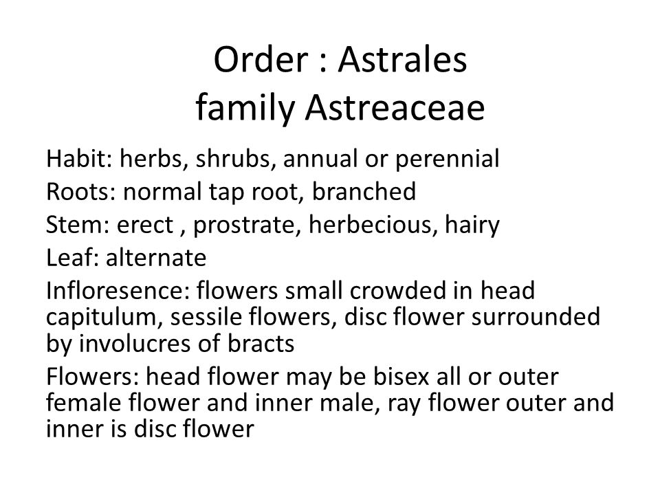 Order : Astrales family Astreaceae