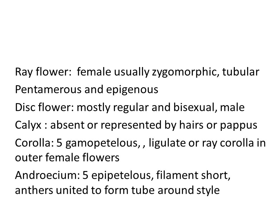 Ray flower: female usually zygomorphic, tubular