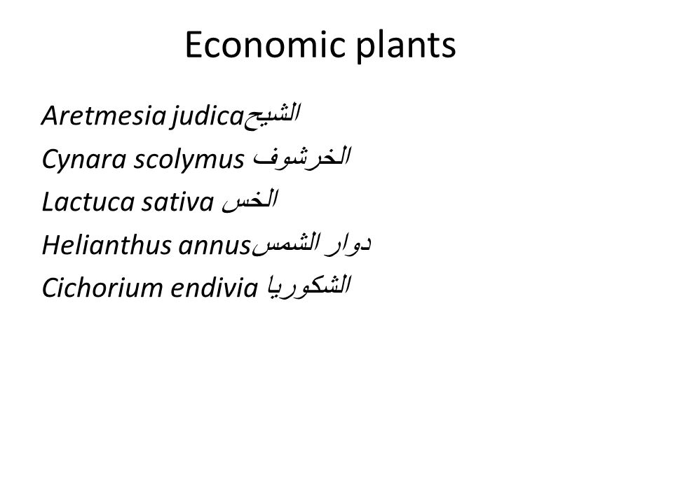 Economic plants Aretmesia judica الشيح Cynara scolymus الخرشوف