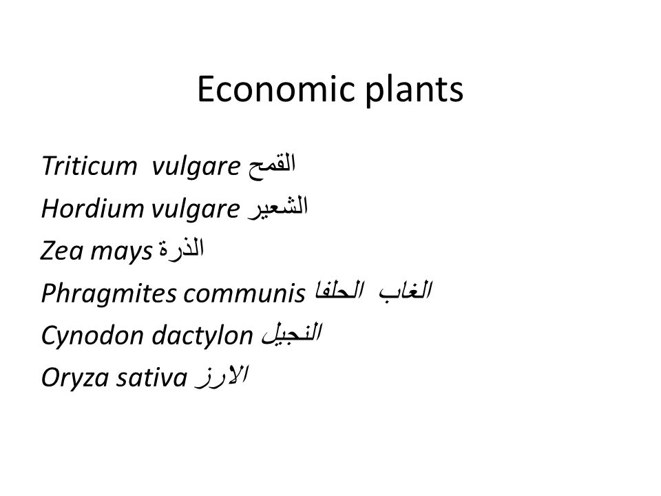 Economic plants Triticum vulgare القمح Hordium vulgare الشعير