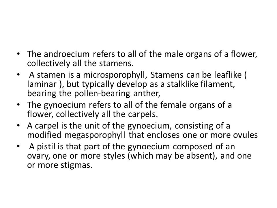 The androecium refers to all of the male organs of a flower, collectively all the stamens.