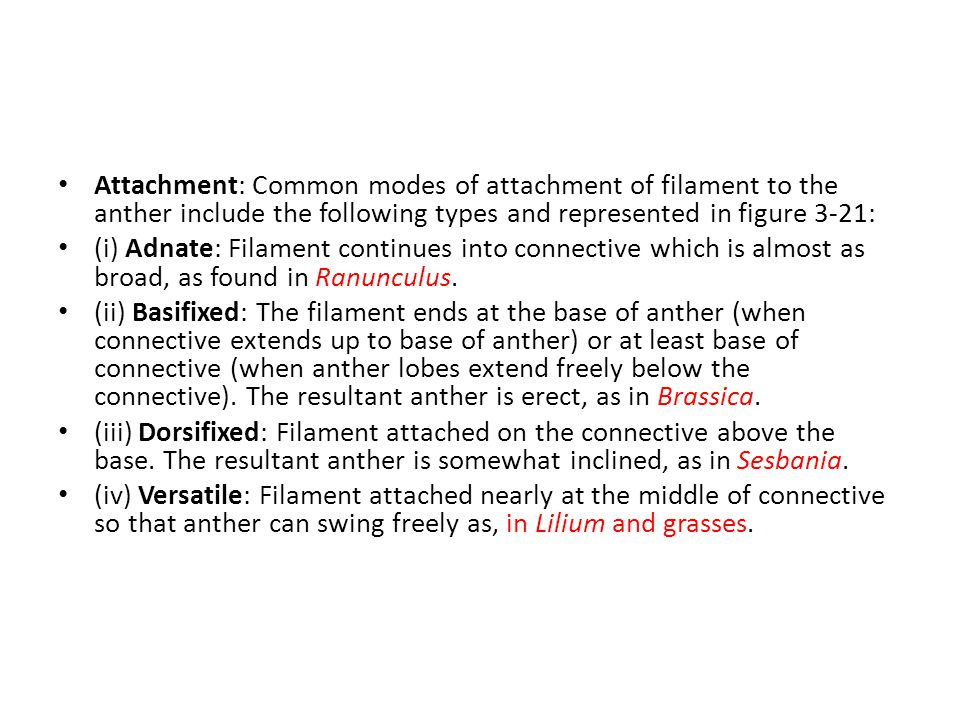 Attachment: Common modes of attachment of filament to the anther include the following types and represented in figure 3-21: