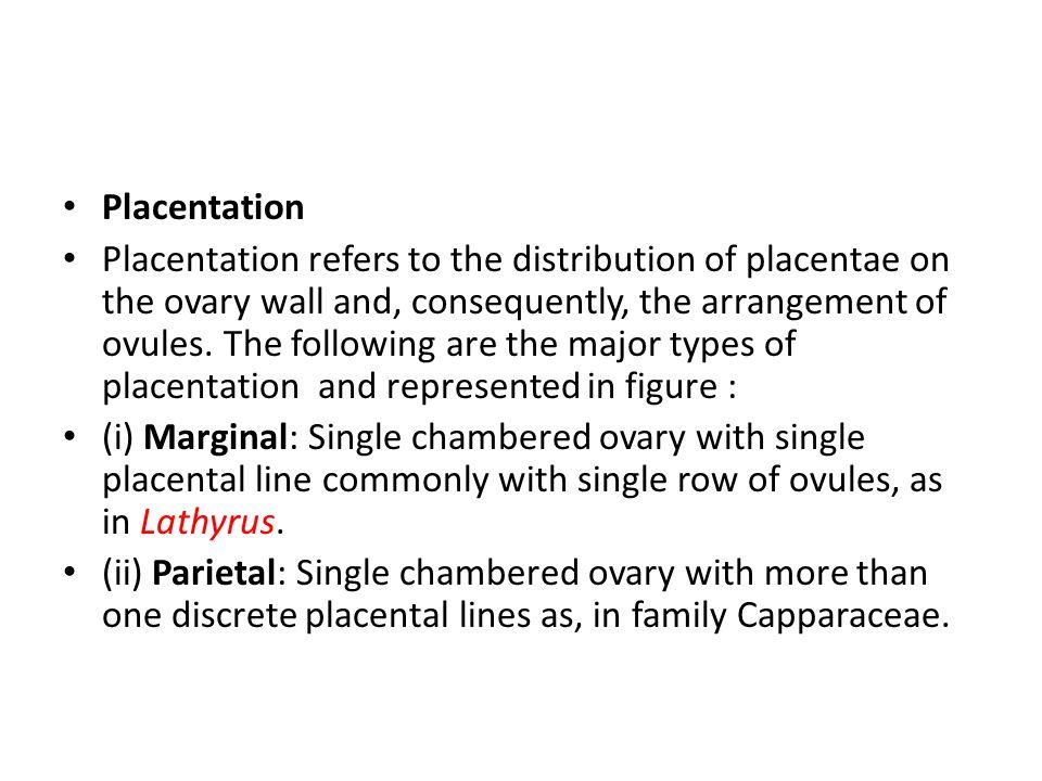 Placentation