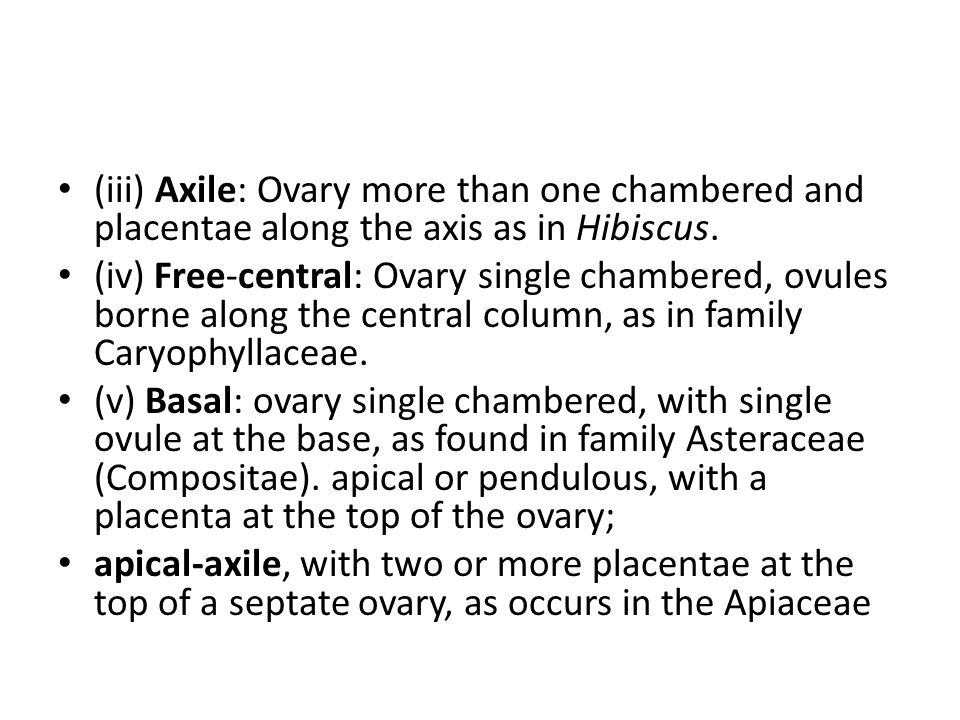 (iii) Axile: Ovary more than one chambered and placentae along the axis as in Hibiscus.