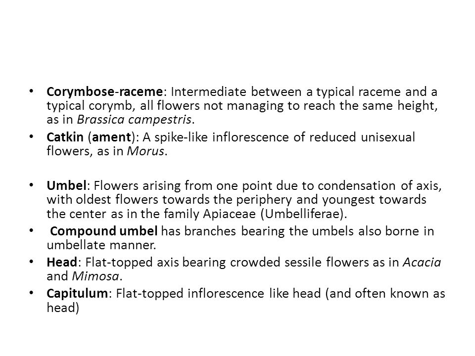 Corymbose-raceme: Intermediate between a typical raceme and a typical corymb, all flowers not managing to reach the same height, as in Brassica campestris.