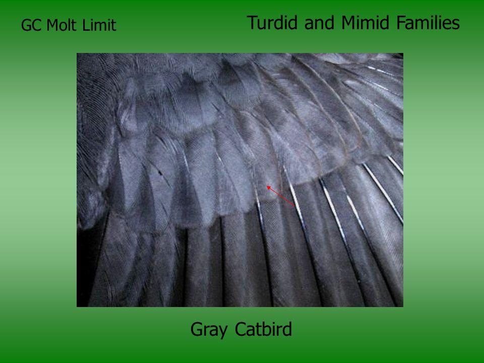 Turdid and Mimid Families