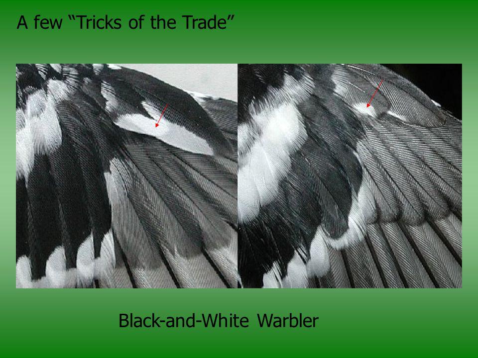 A few Tricks of the Trade