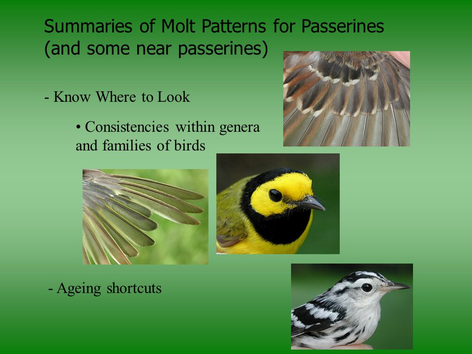 Summaries of Molt Patterns for Passerines (and some near passerines)