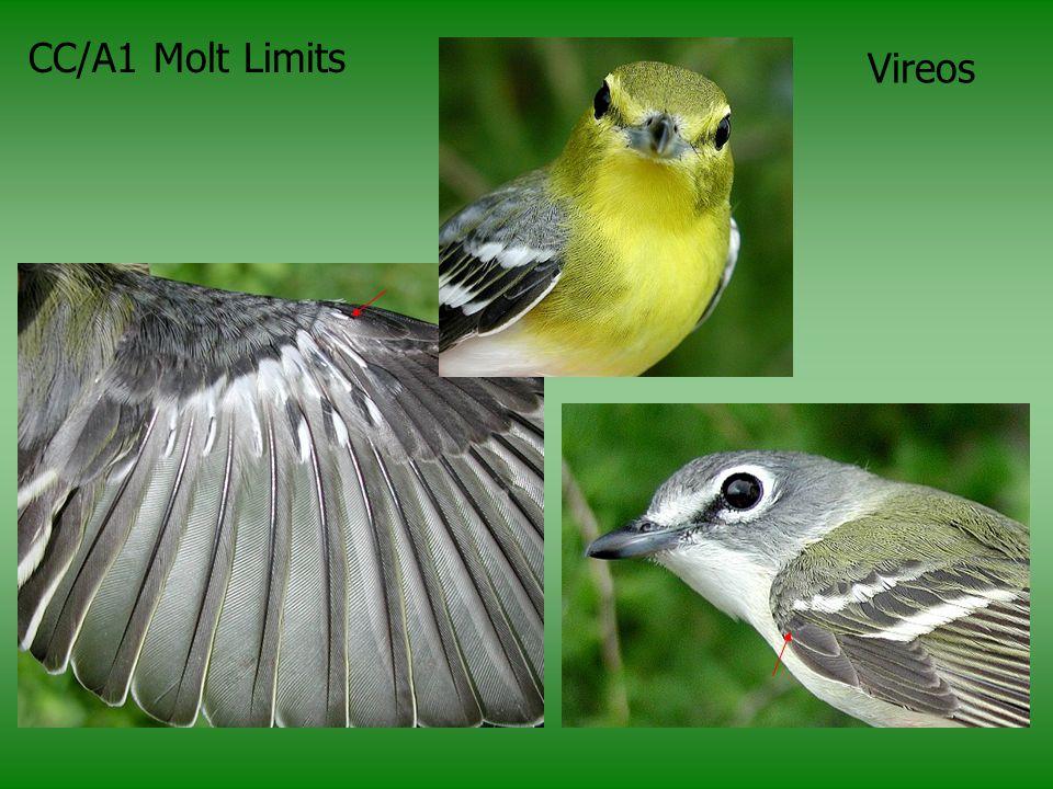 CC/A1 Molt Limits Vireos More A1 molt limits