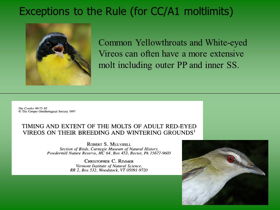 Exceptions to the Rule (for CC/A1 moltlimits)
