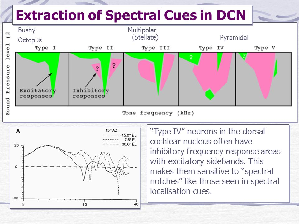 Extraction of Spectral Cues in DCN