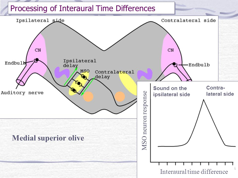 Processing of Interaural Time Differences