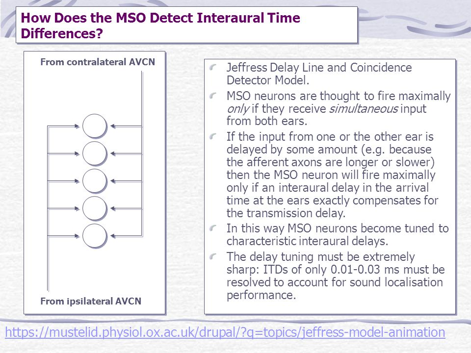 How Does the MSO Detect Interaural Time Differences