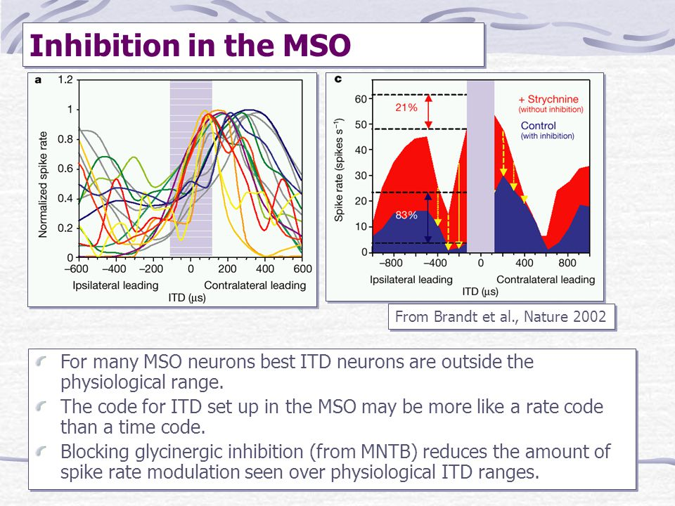 Inhibition in the MSO From Brandt et al., Nature 2002. For many MSO neurons best ITD neurons are outside the physiological range.