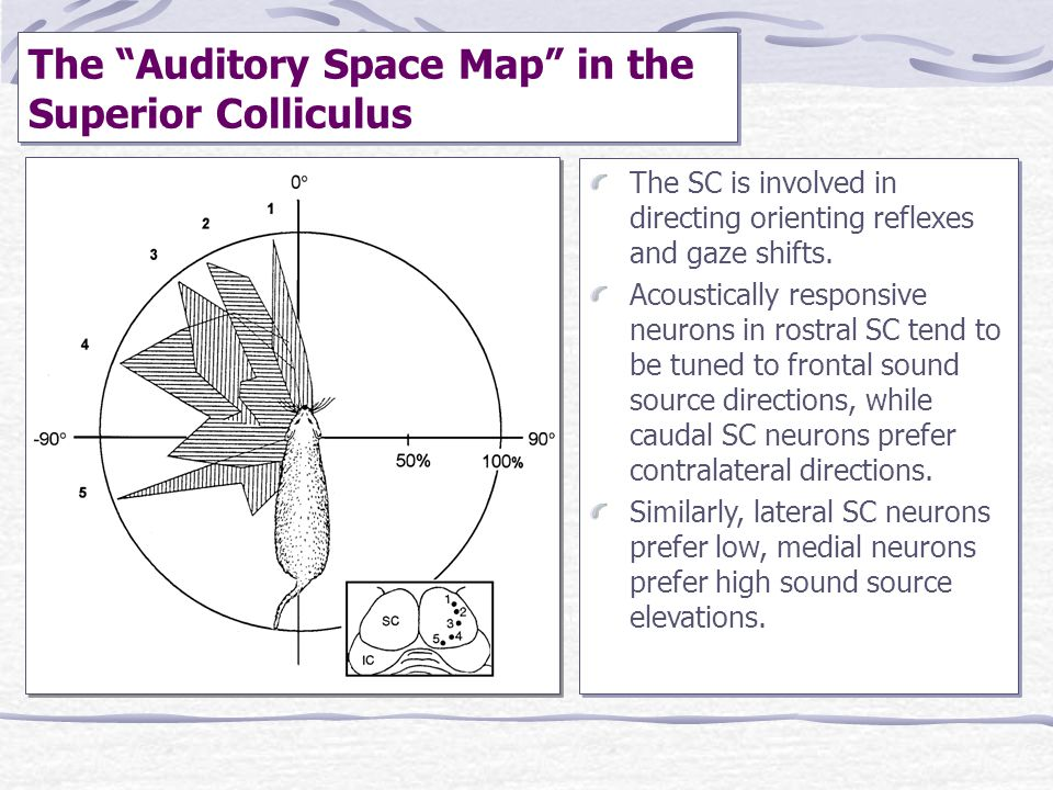 The Auditory Space Map in the Superior Colliculus